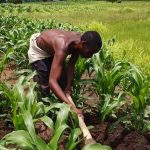 FG wants Banks to Invest 25% of their profit share in BoA to improve farmers lending