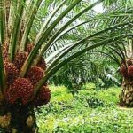 Abia Governor advocates replacement of flowers with palm trees