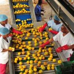 Agro-processor blames knowledge gap for low standards of local produce