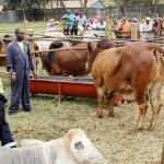 Ondo State Partners with World Bank on Livestock Project