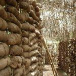 Nigeria Yam Export Programme targets huge earnings