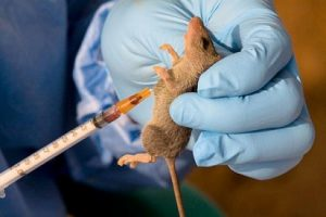 LASSA FEVER: Enugu confirms one death