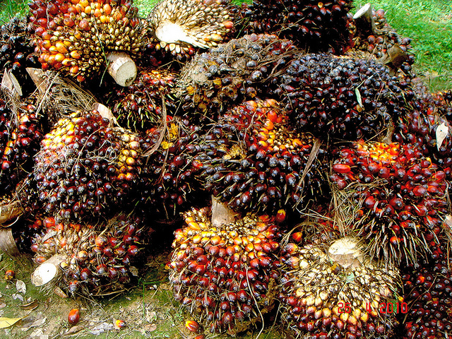 Palm oil makers' profits slump to five-year low on supply glut